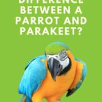 What Is The Difference Between A Parrot And Parakeet? Choosing The Right Pet.