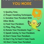 10 Ways To Make Your Parakeet Like You More