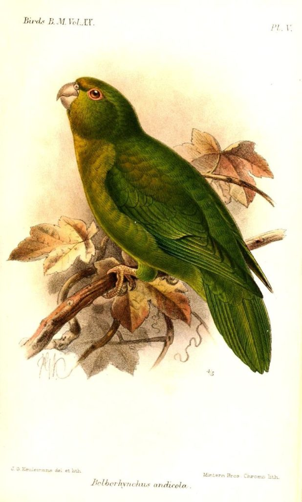 Different Types Of Parakeets: Pictures, Facts And Interesting Information