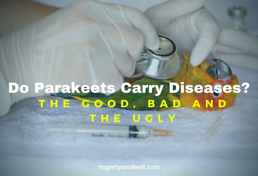 Do Parakeets Carry Diseases?