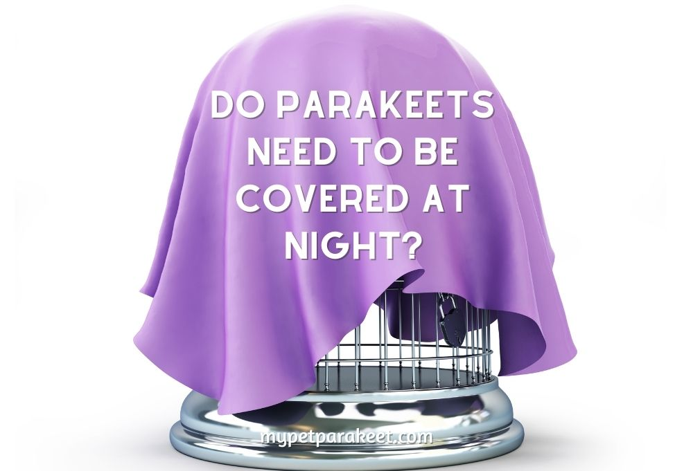 Do Parakeets Need to be Covered at Night?