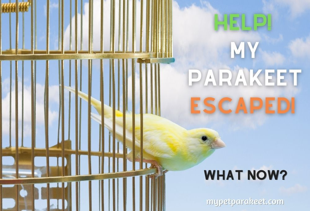 My Parakeet Escaped