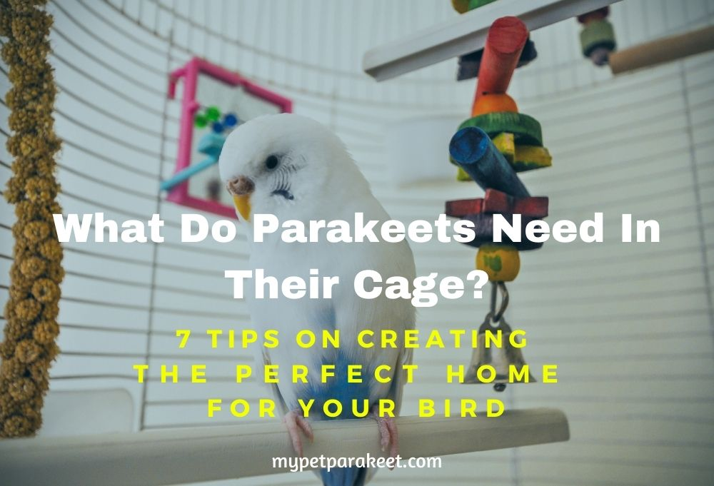 What Do Parakeets Need In Their Cage? Tips On Creating The Perfect Home For Your Bird