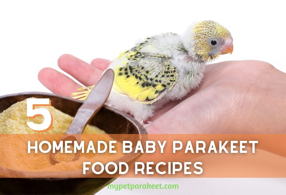 What Can I Feed My Baby Parakeet? 5 Homemade Baby Budgie Food Recipes