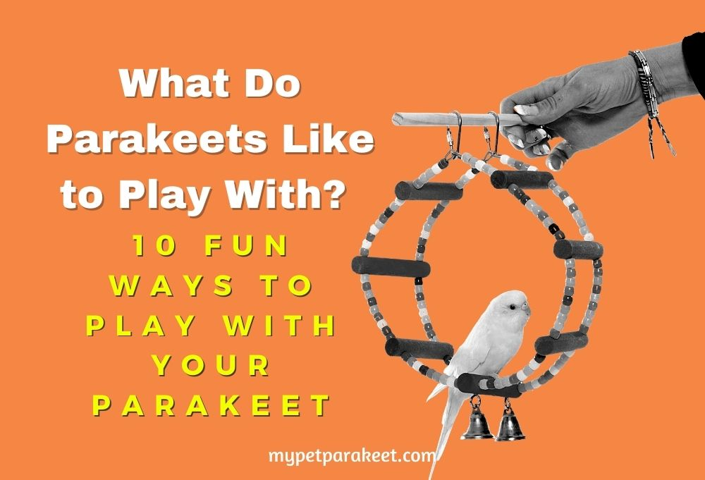 What Do Parakeets Like To Play With? 10 Fun Ways To Play With Your Parakeet