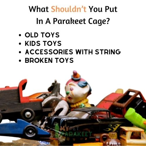 What Shouldn't You Put In A Parakeet Cage?