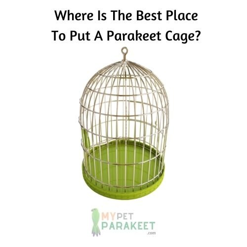 Where Is The Best Place To Put A Parakeet Cage?