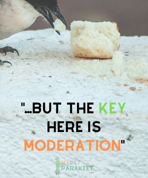 Can-Parakeets-Eat-Bread?