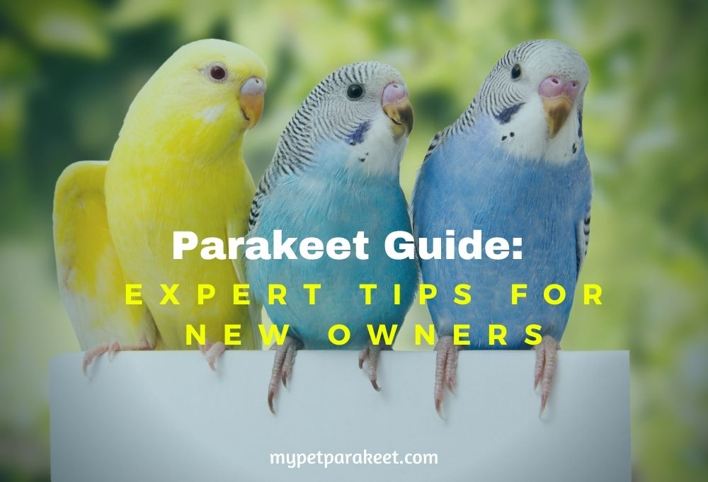 Parakeet Owners Guide: How To Take Care Of A Parakeet
