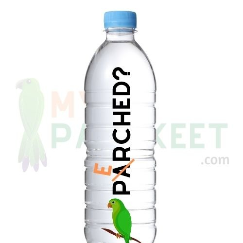 &Quot;Can Parakeets Drink Tap Water?&Quot;