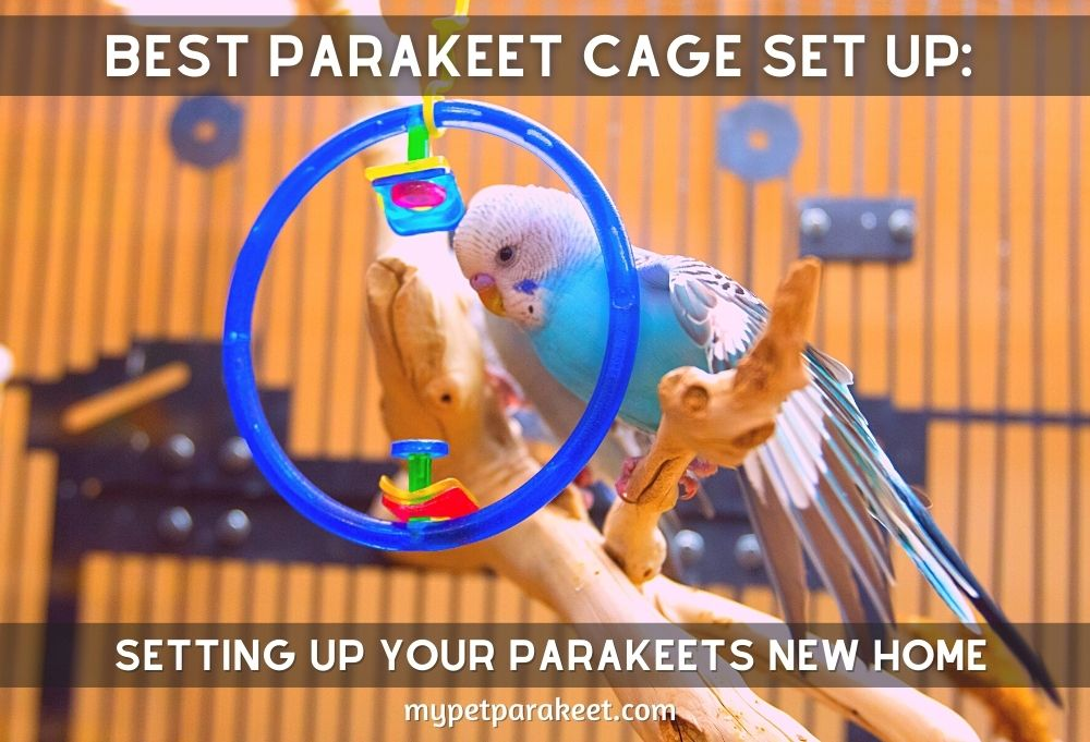 Best Parakeet Cage Set Up: Setting Up Your Parakeets New Home