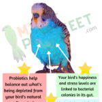 Why Give Your Bird Probiotics