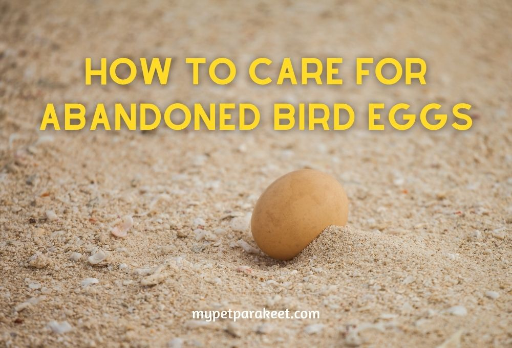 How To Care For Abandoned Bird Eggs