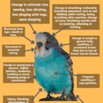 Putting Together A Parakeet First Aid Kit: What You Need To Know