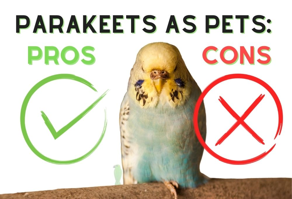 Parakeets As Pets: Pros And Cons