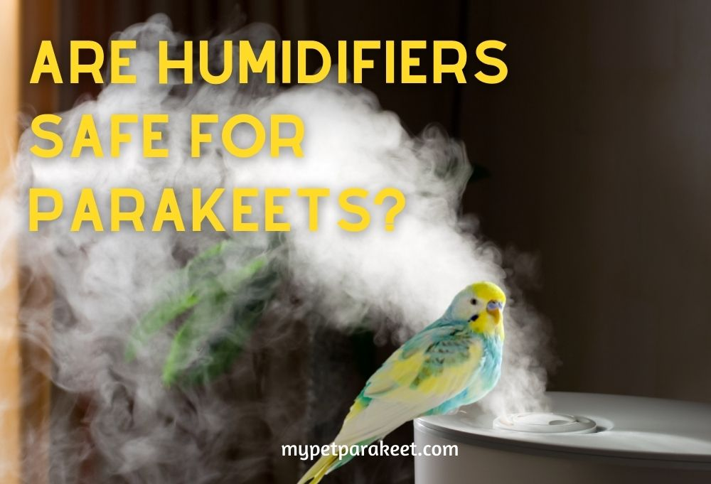 are humidifiers safe for parakeets