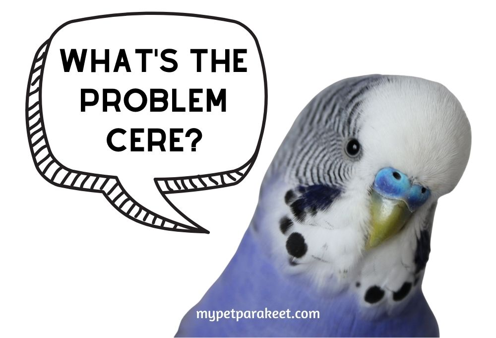 Parakeet Ceres - Cere Color Change, Growth and Common Problems