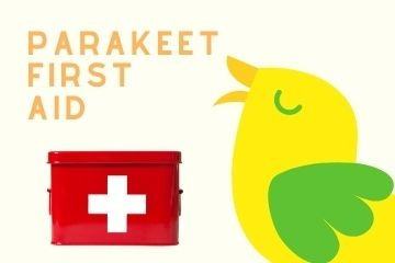 Shop For Parakeet First Aid