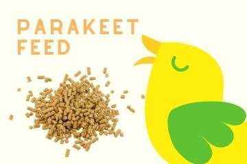 Shop For Parakeet Feed