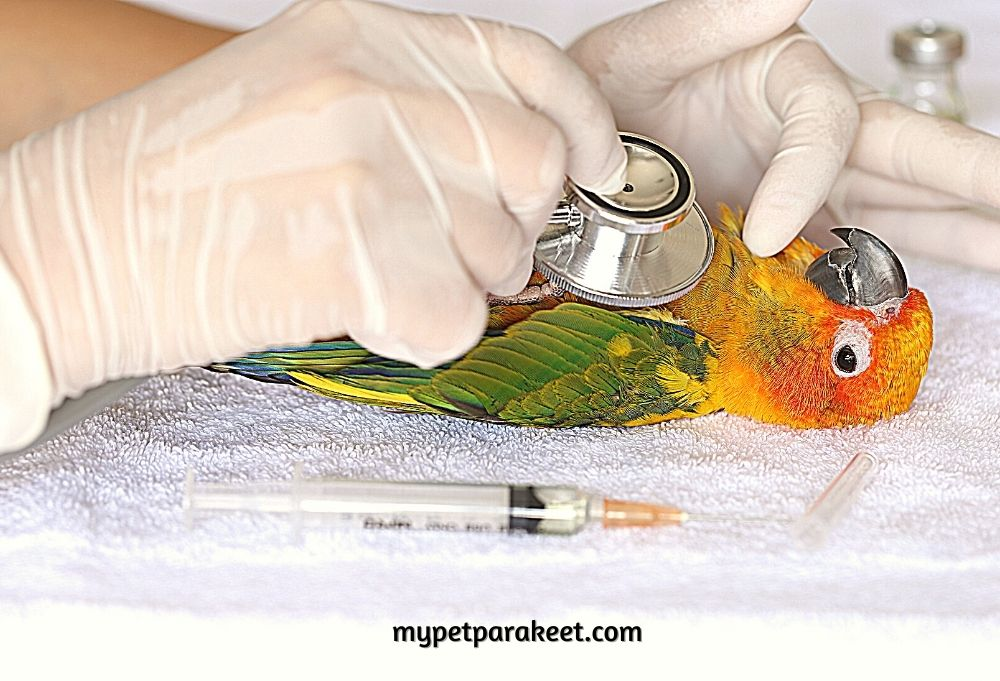 How Do You Tell If A Parakeet Is Hurt?