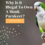 Why It Is Illegal To Own A Monk Parakeet (Quaker Parrot) In These States!