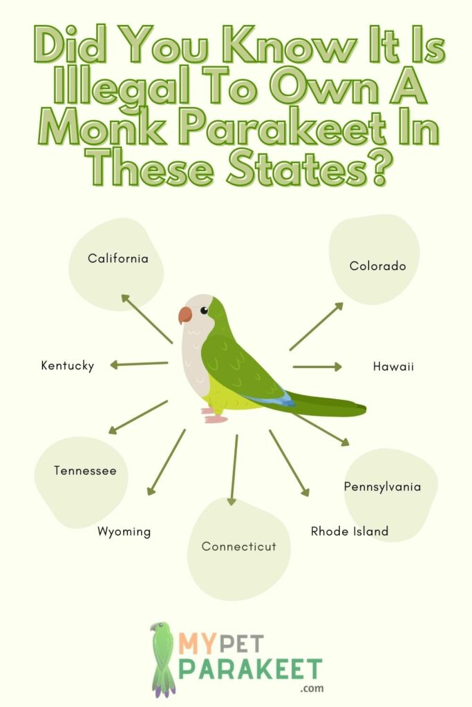 Why It Is Illegal To Own A Monk Parakeet