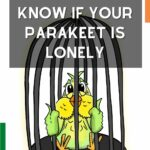 Do Parakeets Get Lonely?