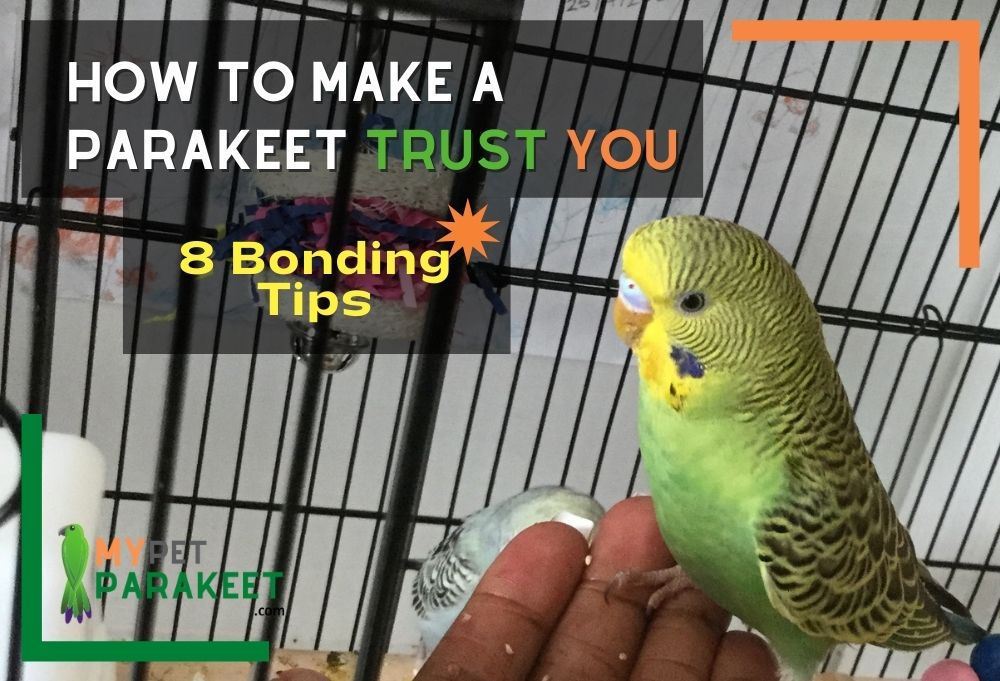 How To Make A Parakeet Trust You