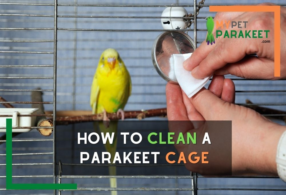How To Clean A Parakeet Cage