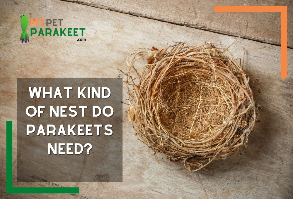 What Kind Of Nest Do Parakeets Need? Choosing The Right One