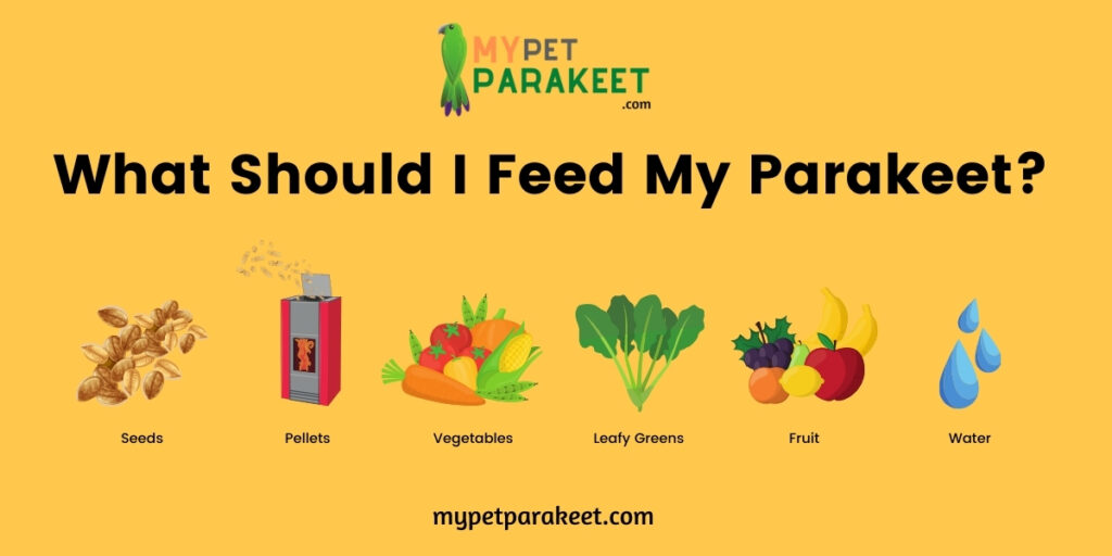 What Should I Feed My Parakeet?