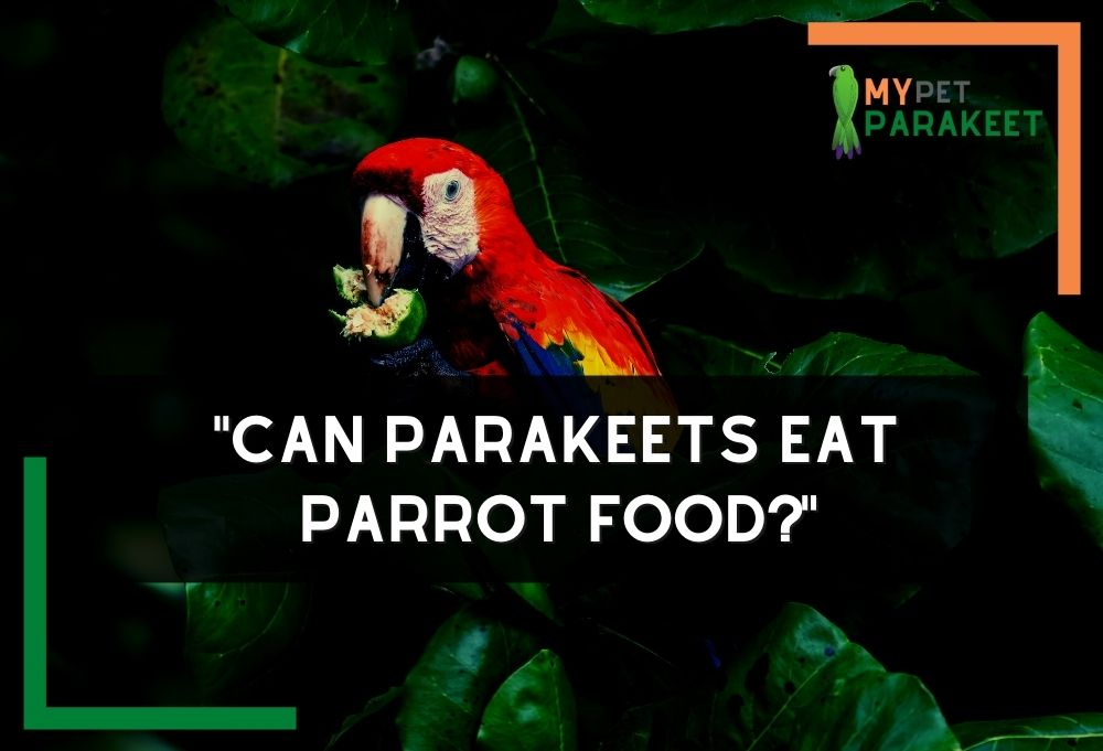Can Parakeets Eat Parrot Food