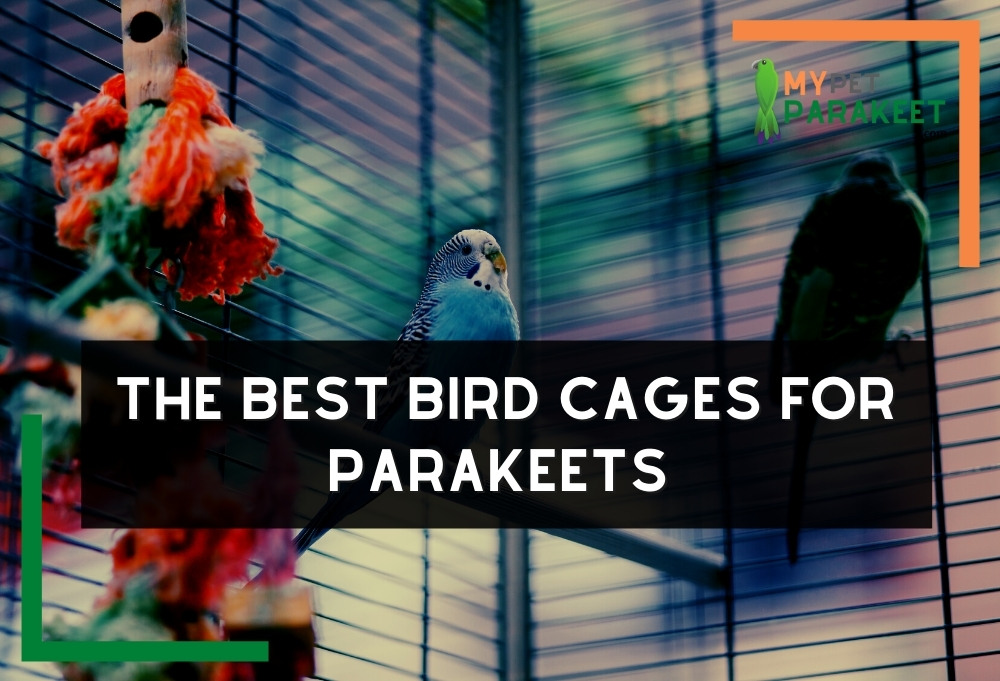 The Best Bird Cages For Parakeets (Affordable Home Cages For Budgies)