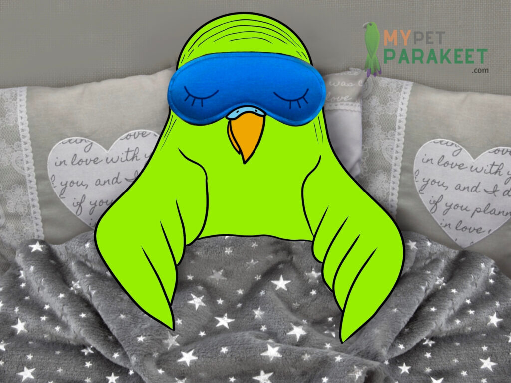 Why Is My Parakeet Sleeping So Much?