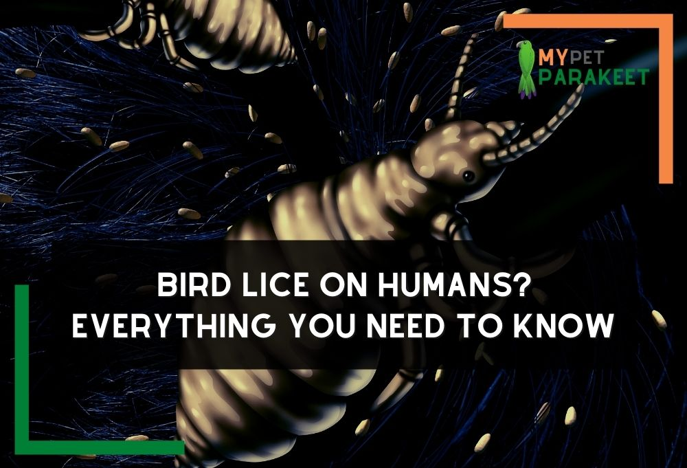 Bird Lice On Humans? Everything You Need To Know